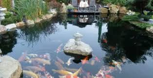 Tại sao cần vệ sinh hệ thống lọc nước hồ cá koi 1