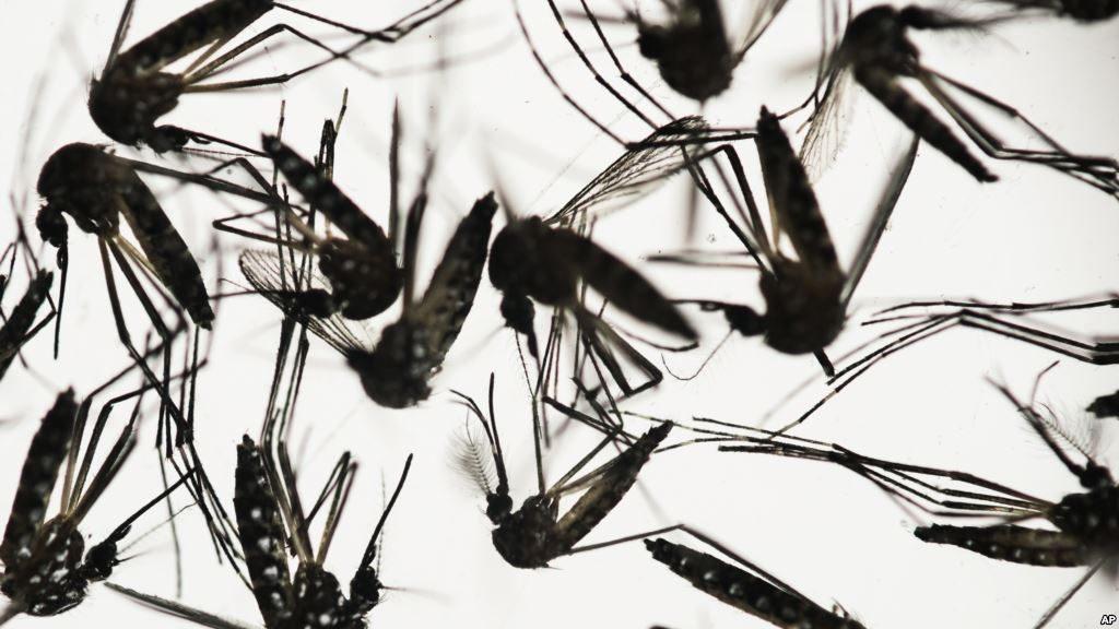 Công ty phun thuốc diệt muỗi và kiểm soát côn trùng nổi tiếng nhất Hà Nội (2)